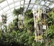 Orchideje v Botanické zahradě